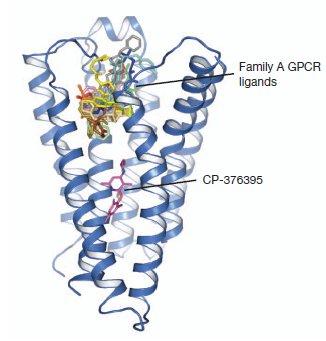 GPCR-FamB